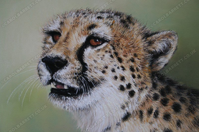 """<span style=""""float:left"""">Blondi</span><span style=""""float:right""""><a href=""""https://www.carolbarrett.co.uk/paintings/blondi/?from=/cheetah-sold/"""">More info »</a></span>"""