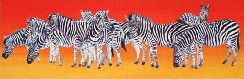 """<span style=""""float:left"""">Bold Confusion</span><span style=""""float:right""""><a href=""""https://www.carolbarrett.co.uk/paintings/bold-confusion/?from=/african-wildlife-for-sale/"""">More info »</a></span>"""