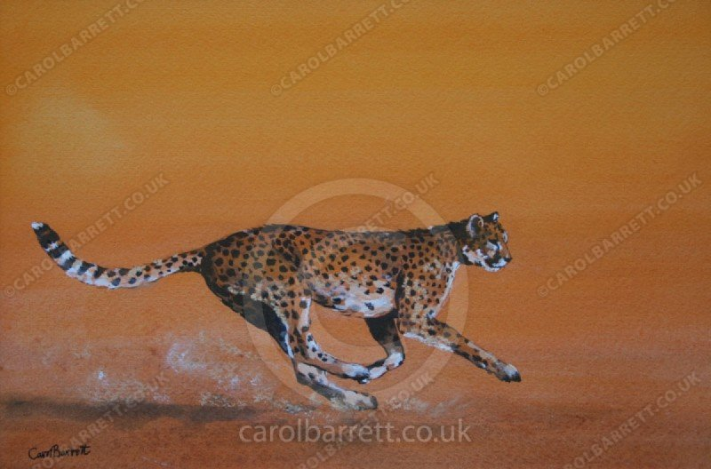 "<span style=""float:left"">Built for Speed</span> <span style=""float:right""><a href=""https://www.carolbarrett.co.uk/paintings/built-for-speed/?from=/cheetah-sold/"">More info »</a></span>"