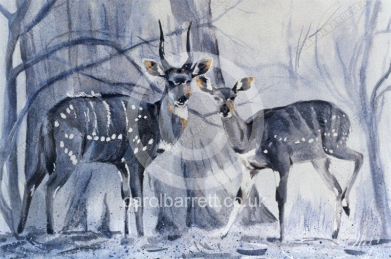 "<span style=""float:left"">Bush Buck pair</span> <span style=""float:right""><a href=""https://www.carolbarrett.co.uk/paintings/bush-buck-pair/?from=/african-wildlife-sold/page/2/"">More info »</a></span>"