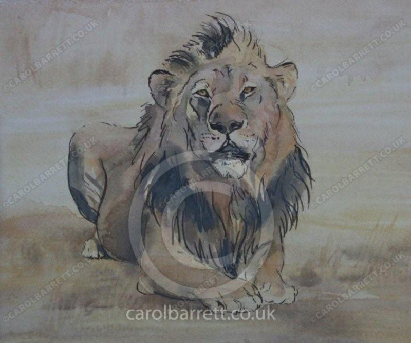 "<span style=""float:left"">Caesar</span> <span style=""float:right""><a href=""https://www.carolbarrett.co.uk/paintings/caesar/?from=/big-cats-sold/"">More info »</a></span>"