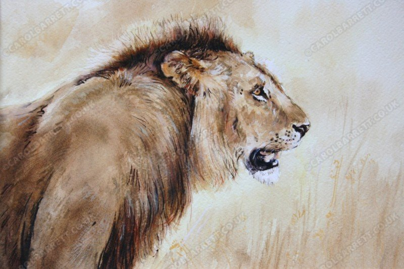 """<span style=""""float:left"""">Challenger</span><span style=""""float:right""""><a href=""""https://www.carolbarrett.co.uk/paintings/challenger/?from=/big-cats-for-sale/"""">More info »</a></span>"""