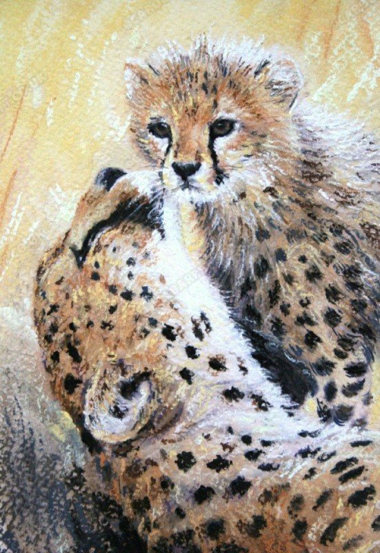 "<span style=""float:left"">Cheetah caress</span> <span style=""float:right""><a href=""https://www.carolbarrett.co.uk/paintings/cheetah-caress/?from=/cheetah-sold/"">More info »</a></span>"