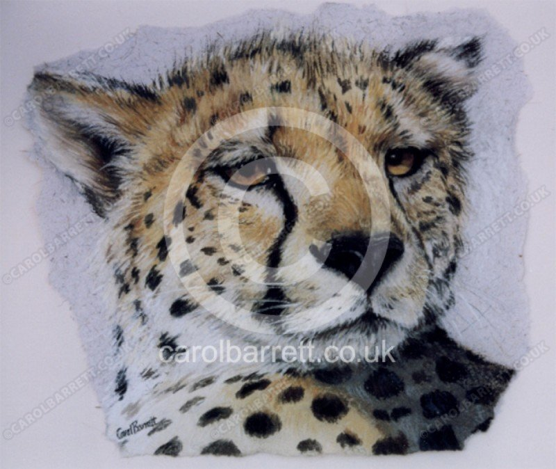"<span style=""float:left"">Cheetah Gaze</span> <span style=""float:right""><a href=""https://www.carolbarrett.co.uk/paintings/heetah-gaze/?from=/big-cats-sold/"">More info »</a></span>"