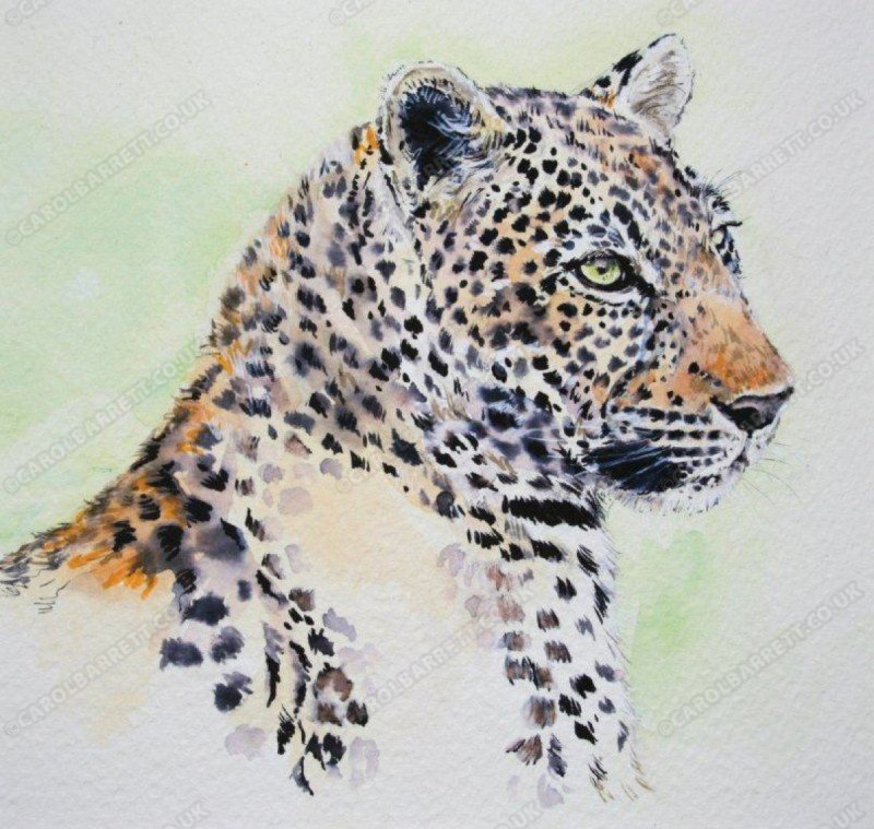 "<span style=""float:left"">Chui – Leopard</span> <span style=""float:right""><a href=""https://www.carolbarrett.co.uk/paintings/chui-leopard/?from=/big-cats-sold/"">More info »</a></span>"