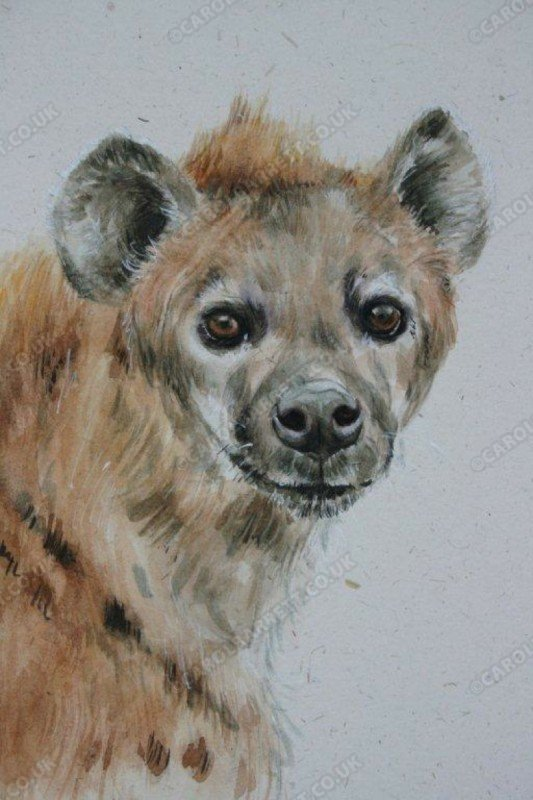 """<span style=""""float:left"""">Clan Leader – Spotted Hyena</span><span style=""""float:right""""><a href=""""https://www.carolbarrett.co.uk/paintings/clan-leader-spotted-hyaena/?from=/wild-dog-and-hyena-sold/"""">More info »</a></span>"""