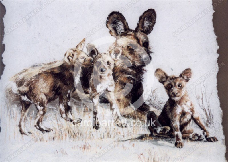 """<span style=""""float:left"""">Close ties (wild dog)</span><span style=""""float:right""""><a href=""""https://www.carolbarrett.co.uk/paintings/close-ties-wild-dog/?from=/wild-dog-and-hyena-sold/"""">More info »</a></span>"""