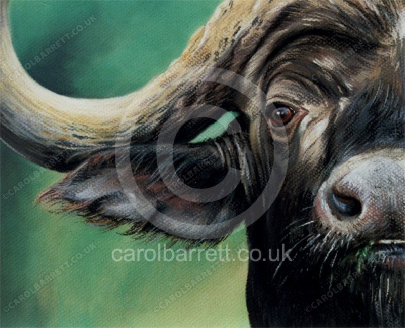 "<span style=""float:left"">Cornered (cape buffalo)</span> <span style=""float:right""><a href=""https://www.carolbarrett.co.uk/paintings/cornered-cape-buffalo/?from=/african-wildlife-sold/"">More info »</a></span>"