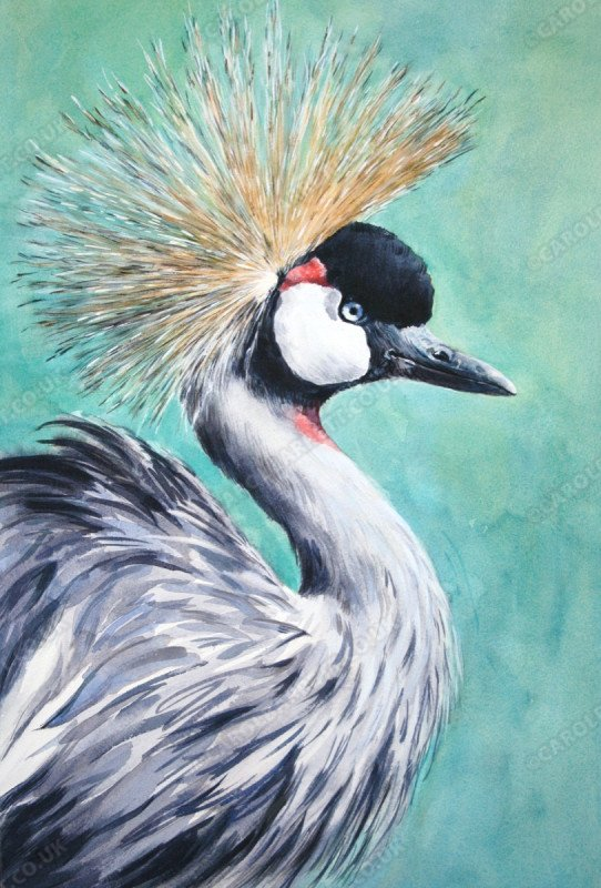 """<span style=""""float:left"""">Crowded Crane</span><span style=""""float:right""""><a href=""""https://www.carolbarrett.co.uk/paintings/crowded-crane/?from=/birds-for-sale/"""">More info »</a></span>"""