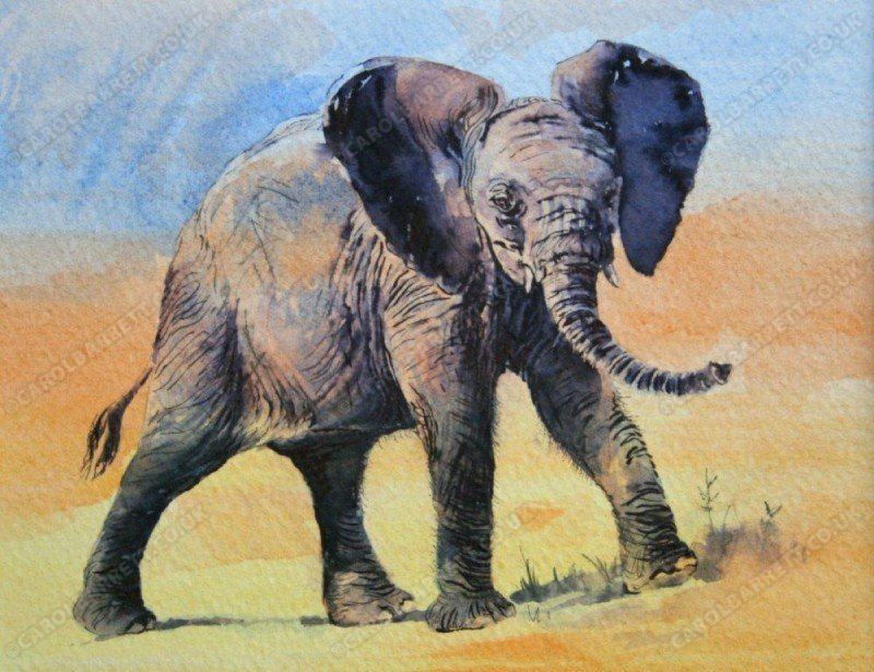 "<span style=""float:left"">Curiosity – Juvenile elephant</span> <span style=""float:right""><a href=""https://www.carolbarrett.co.uk/paintings/curiosity-juvenile-elephant/?from=/elephants-sold/"">More info »</a></span>"