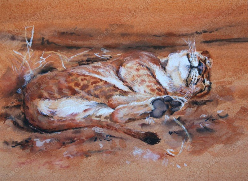 "<span style=""float:left"">Dream time</span> <span style=""float:right""><a href=""https://www.carolbarrett.co.uk/paintings/dream-time/?from=/big-cats-sold/page/2/"">More info »</a></span>"