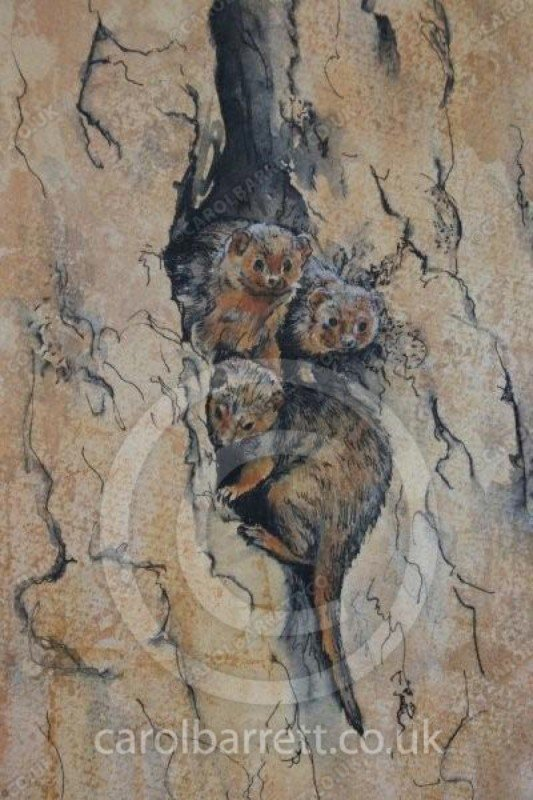 "<span style=""float:left"">Dwarf Mongoose den</span> <span style=""float:right""><a href=""https://www.carolbarrett.co.uk/paintings/dwarf-mongoose-den/?from=/african-wildlife-sold/"">More info »</a></span>"