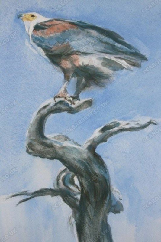 "<span style=""float:left"">Eagle Totem – African Fish Eagle</span> <span style=""float:right""><a href=""https://www.carolbarrett.co.uk/paintings/eagle-totem-african-fish-eagle/?from=/birds-for-sale/"">More info »</a></span>"