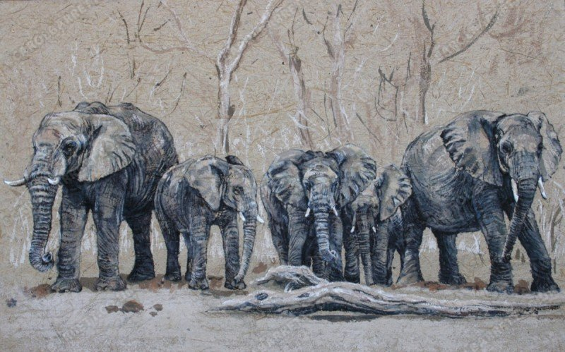 "<span style=""float:left"">Family ties</span> <span style=""float:right""><a href=""https://www.carolbarrett.co.uk/paintings/family-ties/?from=/elephants-sold/page/3/"">More info »</a></span>"