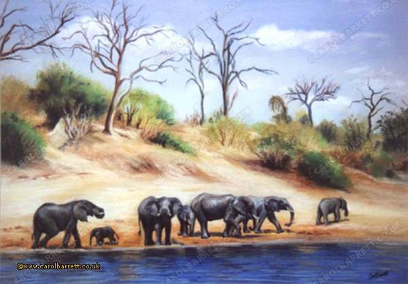 "<span style=""float:left"">Favourite Spot (Elephants at Chobe River)</span> <span style=""float:right""><a href=""https://www.carolbarrett.co.uk/paintings/favourite-spot-elephants-at-chobe-river/?from=/elephants-sold/page/2/"">More info »</a></span>"