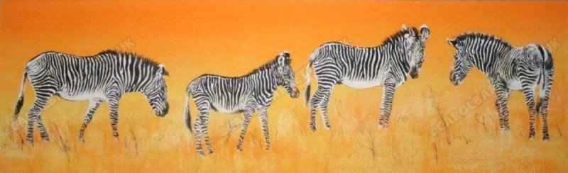 "<span style=""float:left"">Fine stripes – Grevy's Zebra</span> <span style=""float:right""><a href=""https://www.carolbarrett.co.uk/paintings/fine-stripes-grevys-zebra/?from=/african-wildlife-sold/"">More info »</a></span>"