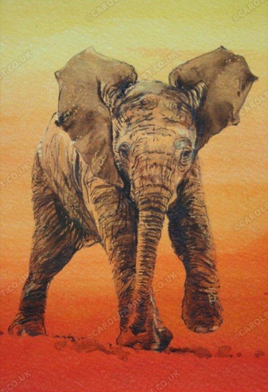 "<span style=""float:left"">First trek – Baby elephant</span> <span style=""float:right""><a href=""https://www.carolbarrett.co.uk/paintings/first-trek-baby-elephant/?from=/elephants-sold/"">More info »</a></span>"