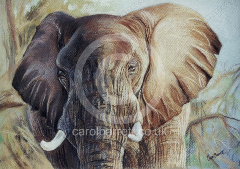 "<span style=""float:left"">Gentle Giant (elephant)</span> <span style=""float:right""><a href=""https://www.carolbarrett.co.uk/paintings/gentle-giant-elephant/?from=/elephants-sold/"">More info »</a></span>"