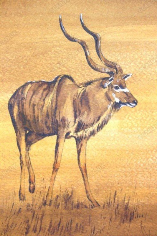 "<span style=""float:left"">Greater Kudu bull</span> <span style=""float:right""><a href=""https://www.carolbarrett.co.uk/paintings/greater-kudu-bull/?from=/african-wildlife-sold/"">More info »</a></span>"