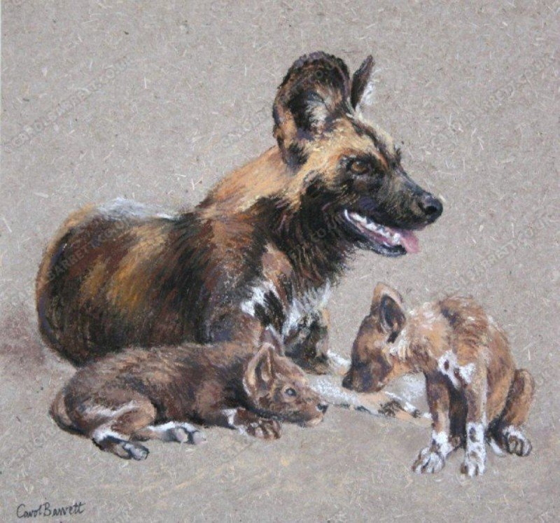 """<span style=""""float:left"""">Guard duty- African Wild Dog</span><span style=""""float:right""""><a href=""""https://www.carolbarrett.co.uk/paintings/guard-duty-african-wild-dog/?from=/wild-dog-and-hyena-sold/"""">More info »</a></span>"""
