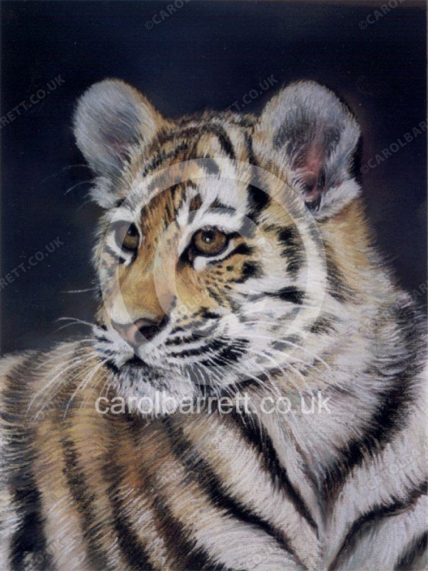 "<span style=""float:left"">Hope (Amur tiger cub)</span> <span style=""float:right""><a href=""https://www.carolbarrett.co.uk/paintings/hope-amur-tiger-cub/?from=/big-cats-sold/"">More info »</a></span>"