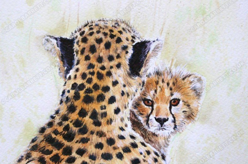 "<span style=""float:left"">Inquisitive cub</span> <span style=""float:right""><a href=""https://www.carolbarrett.co.uk/paintings/inquisitive-cub/?from=/cheetah-sold/"">More info »</a></span>"