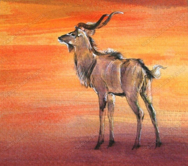 "<span style=""float:left"">Kudu Sunset</span> <span style=""float:right""><a href=""https://www.carolbarrett.co.uk/paintings/kudu-sunset-2/?from=/african-wildlife-for-sale/"">More info »</a></span>"