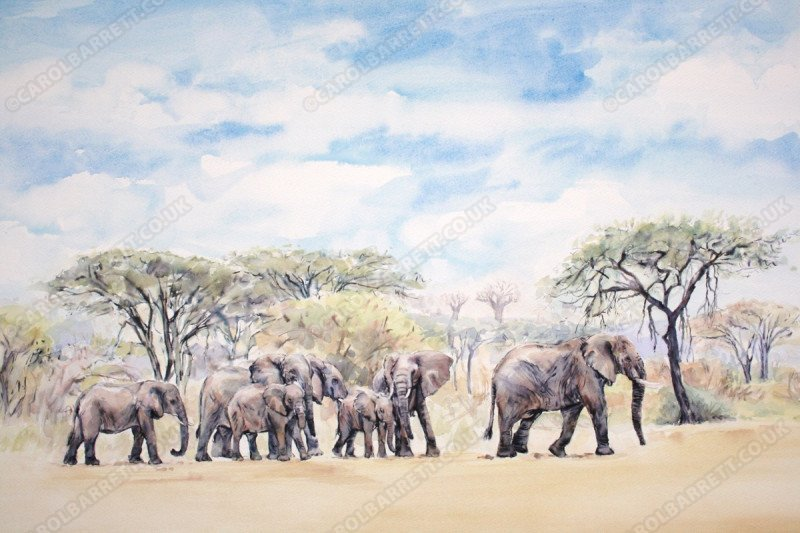 "<span style=""float:left"">Last of the Giants</span> <span style=""float:right""><a href=""https://www.carolbarrett.co.uk/paintings/last-of-the-giants/?from=/elephants-for-sale/"">More info »</a></span>"