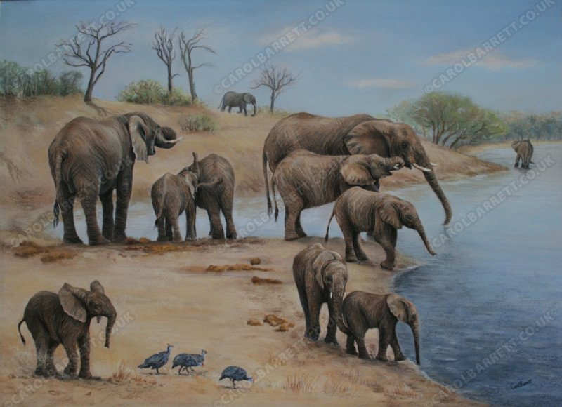 "<span style=""float:left"">Last to Water</span> <span style=""float:right""><a href=""https://www.carolbarrett.co.uk/paintings/last-to-water/?from=/elephants-sold/"">More info »</a></span>"