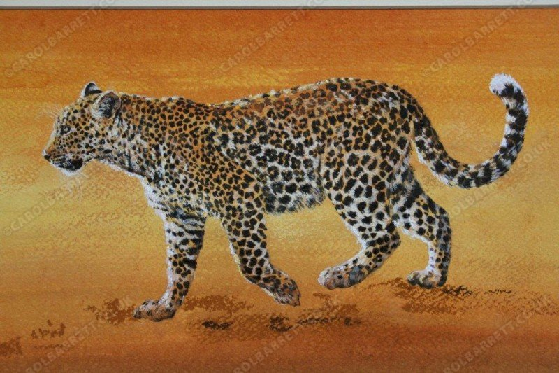 "<span style=""float:left"">Leopard legend</span> <span style=""float:right""><a href=""https://www.carolbarrett.co.uk/paintings/leopard-legend/?from=/big-cats-sold/"">More info »</a></span>"