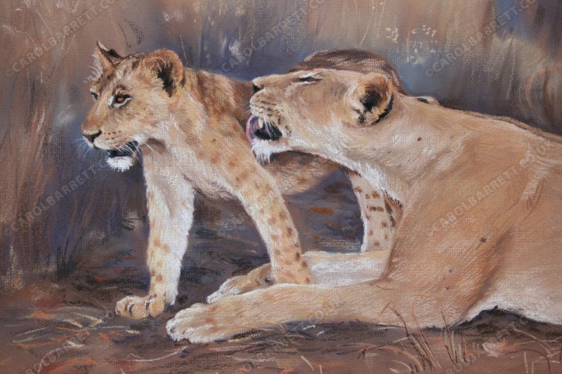 "<span style=""float:left"">Lioness caress</span> <span style=""float:right""><a href=""https://www.carolbarrett.co.uk/paintings/lioness-caress/?from=/big-cats-sold/"">More info »</a></span>"