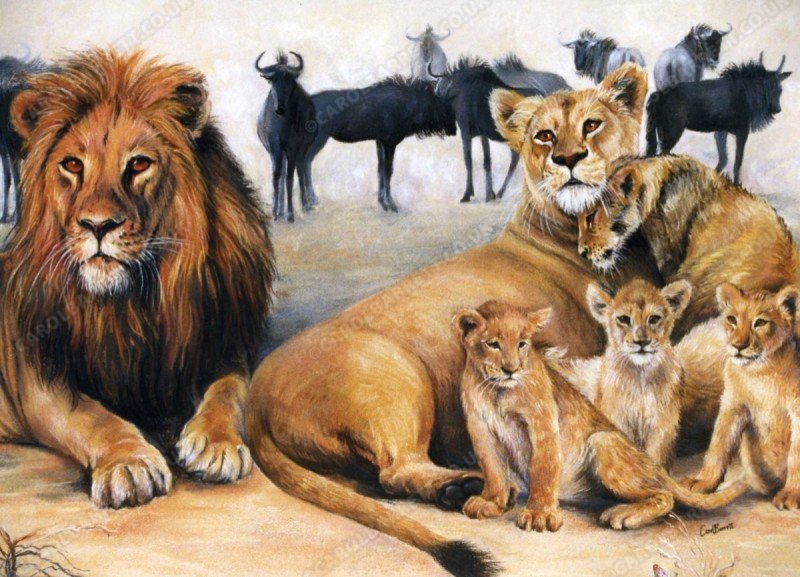 "<span style=""float:left"">Lion Family</span> <span style=""float:right""><a href=""https://www.carolbarrett.co.uk/paintings/lion-family/?from=/big-cats-sold/"">More info »</a></span>"
