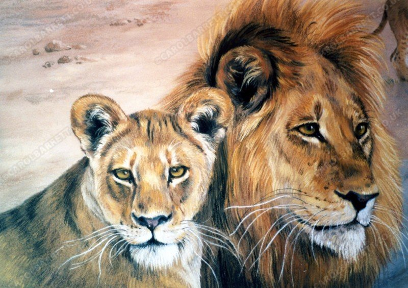 "<span style=""float:left"">Lions by the Chobe River (detail)</span> <span style=""float:right""><a href=""https://www.carolbarrett.co.uk/paintings/lions-by-the-chobe-river-detail/?from=/big-cats-sold/"">More info »</a></span>"
