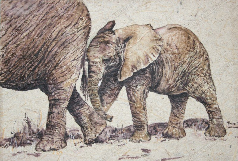 "<span style=""float:left"">Little shadow</span> <span style=""float:right""><a href=""https://www.carolbarrett.co.uk/paintings/little-shadow/?from=/elephants-sold/"">More info »</a></span>"