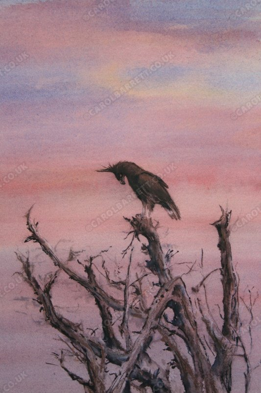 "<span style=""float:left"">Long-Crested Eagle</span> <span style=""float:right""><a href=""https://www.carolbarrett.co.uk/paintings/long-crested-eagle-3/?from=/birds-for-sale/"">More info »</a></span>"