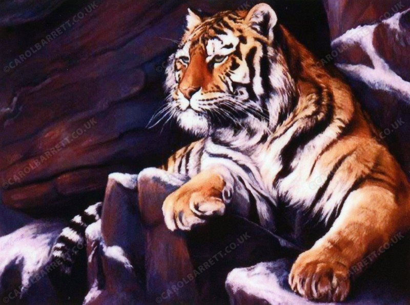 "<span style=""float:left"">Lookout (Siberian Tiger)</span> <span style=""float:right""><a href=""https://www.carolbarrett.co.uk/paintings/lookout-siberian-tiger/?from=/big-cats-sold/"">More info »</a></span>"