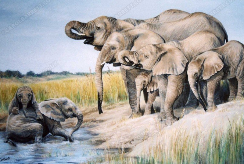 "<span style=""float:left"">Magnificent Seven</span> <span style=""float:right""><a href=""https://www.carolbarrett.co.uk/paintings/magnificent-seven/?from=/elephants-sold/"">More info »</a></span>"