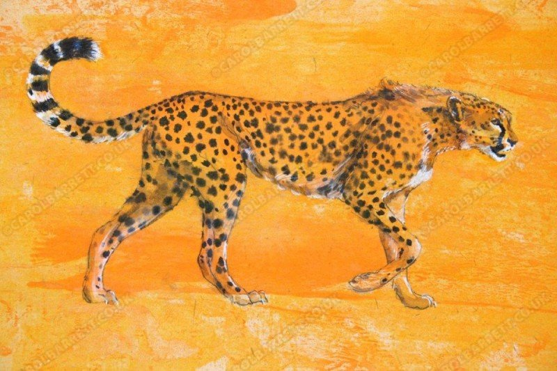"<span style=""float:left"">Mara cheetah</span> <span style=""float:right""><a href=""https://www.carolbarrett.co.uk/paintings/mara-cheetah/?from=/cheetah-sold/"">More info »</a></span>"