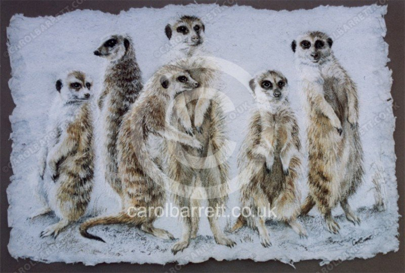 "<span style=""float:left"">Meerkat Team</span> <span style=""float:right""><a href=""https://www.carolbarrett.co.uk/paintings/meerkat-team/?from=/on-specialty-paper-sold/"">More info »</a></span>"