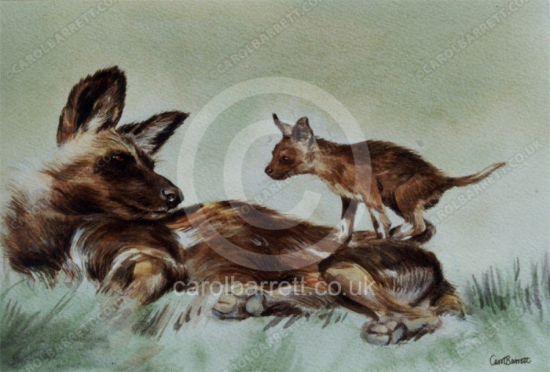 """<span style=""""float:left"""">Much to Learn (alpha female wild dog with pup)</span><span style=""""float:right""""><a href=""""https://www.carolbarrett.co.uk/paintings/much-to-learn-alpha-female-wild-dog-with-pup/?from=/wild-dog-and-hyena-sold/"""">More info »</a></span>"""