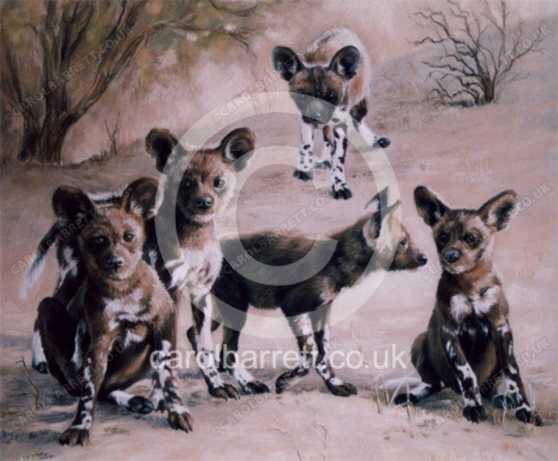 """<span style=""""float:left"""">Novice Members (wild dog pups)</span><span style=""""float:right""""><a href=""""https://www.carolbarrett.co.uk/paintings/novice-members-wild-dog-pups/?from=/wild-dog-and-hyena-sold/"""">More info »</a></span>"""