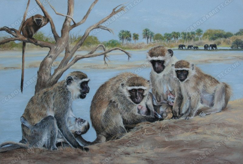 "<span style=""float:left"">Nursing Vervets</span> <span style=""float:right""><a href=""https://www.carolbarrett.co.uk/paintings/nursing-vervets/?from=/hippos-and-primates/"">More info »</a></span>"