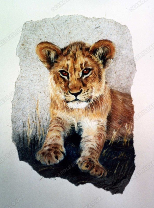 "<span style=""float:left"">Oscar (lion cub)</span> <span style=""float:right""><a href=""https://www.carolbarrett.co.uk/paintings/oscar-lion-cub/?from=/on-specialty-paper-sold/"">More info »</a></span>"