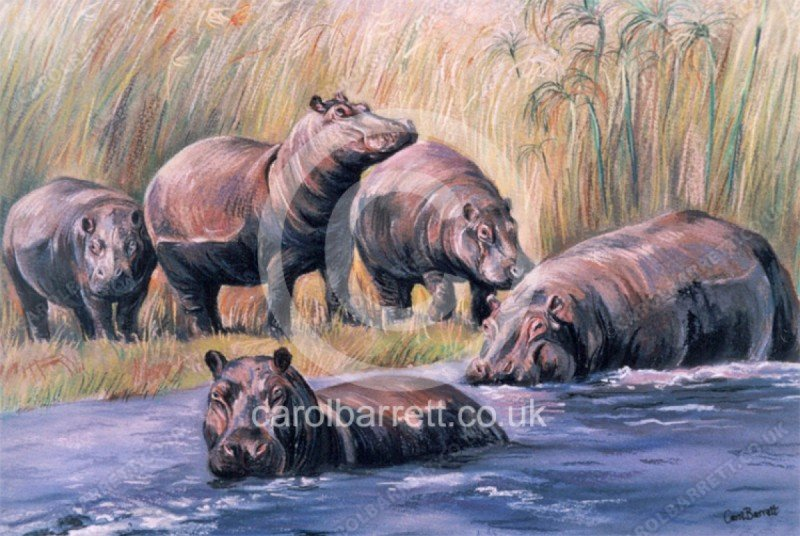 "<span style=""float:left"">Out of the rushes</span> <span style=""float:right""><a href=""https://www.carolbarrett.co.uk/paintings/out-of-the-rushes/?from=/african-wildlife-sold/"">More info »</a></span>"