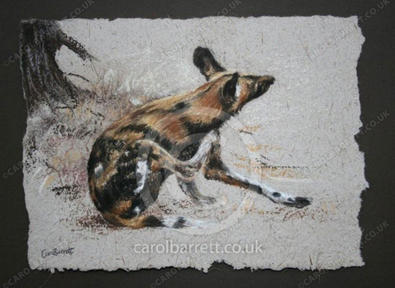 """<span style=""""float:left"""">Painted wolf</span><span style=""""float:right""""><a href=""""https://www.carolbarrett.co.uk/paintings/painted-wolf/?from=/wild-dog-and-hyena-sold/"""">More info »</a></span>"""