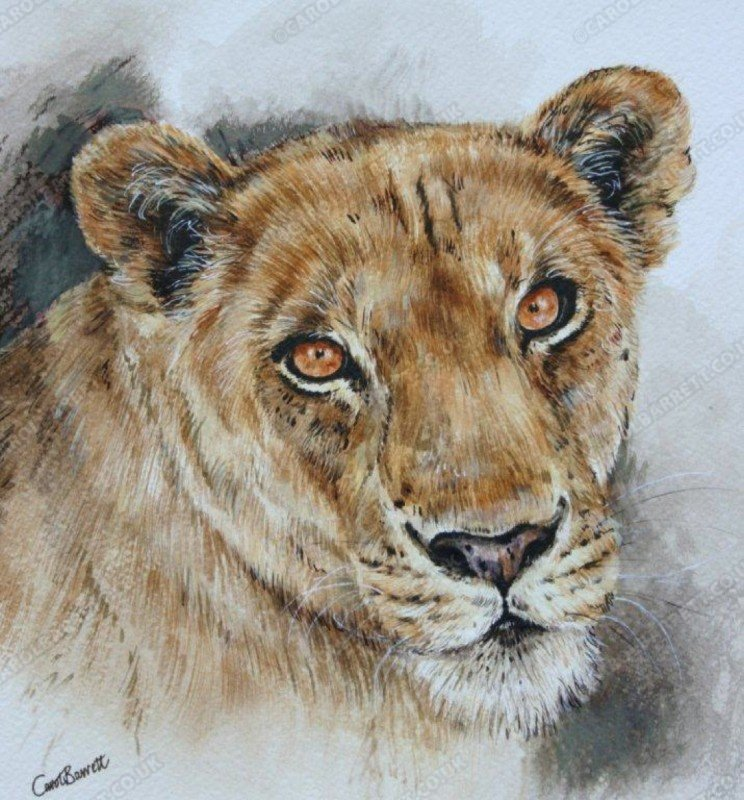 "<span style=""float:left"">Panthera leo</span> <span style=""float:right""><a href=""https://www.carolbarrett.co.uk/paintings/panthera-leo/?from=/big-cats-for-sale/"">More info »</a></span>"