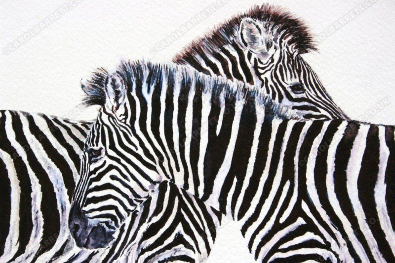 "<span style=""float:left"">Passing stripes – Burchell's Zebra</span> <span style=""float:right""><a href=""https://www.carolbarrett.co.uk/paintings/passing-stripes-burchells-zebra/?from=/african-wildlife-sold/"">More info »</a></span>"