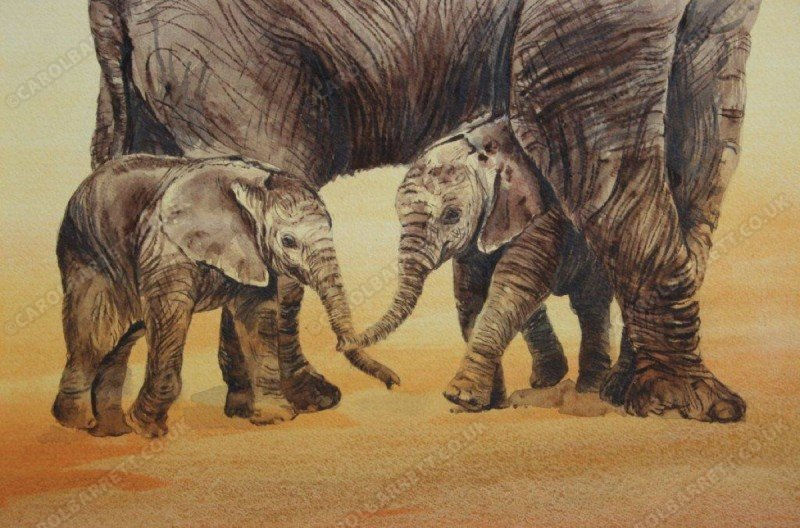 "<span style=""float:left"">Rare event – elephant twins</span> <span style=""float:right""><a href=""https://www.carolbarrett.co.uk/paintings/rare-event-elephant-twins/?from=/elephants-sold/"">More info »</a></span>"