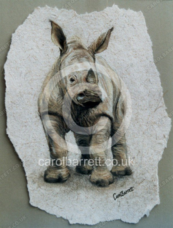 "<span style=""float:left"">Rhino calf</span> <span style=""float:right""><a href=""https://www.carolbarrett.co.uk/paintings/rhino-calf/?from=/on-specialty-paper-sold/"">More info »</a></span>"
