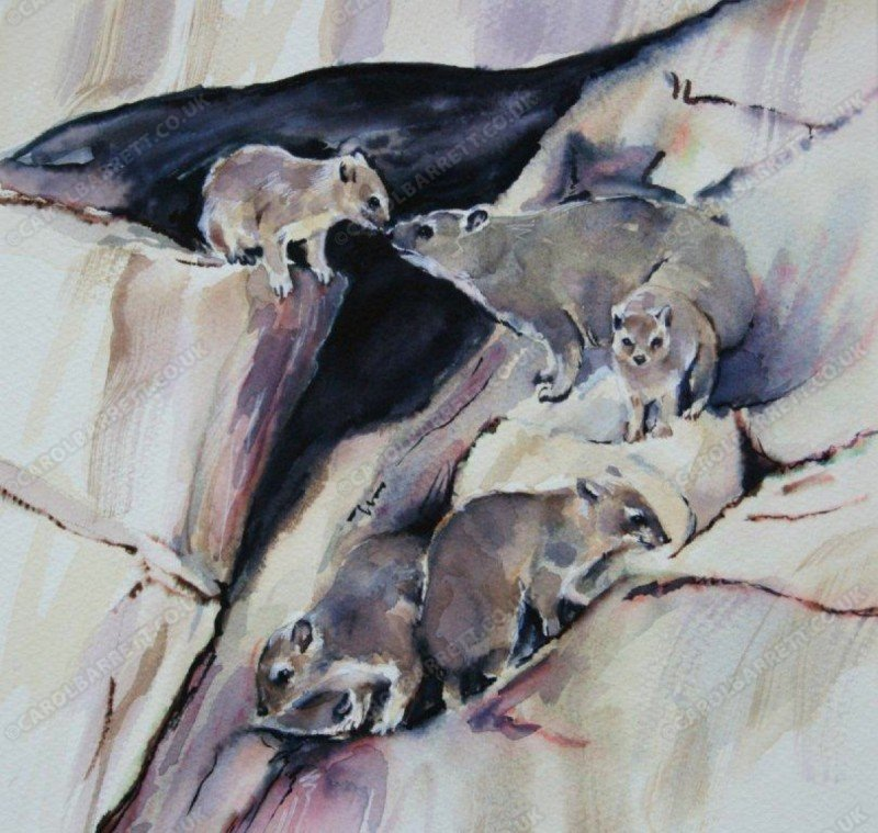 "<span style=""float:left"">Rock Hyrax</span> <span style=""float:right""><a href=""https://www.carolbarrett.co.uk/paintings/rock-hyrax/?from=/african-wildlife-sold/"">More info »</a></span>"